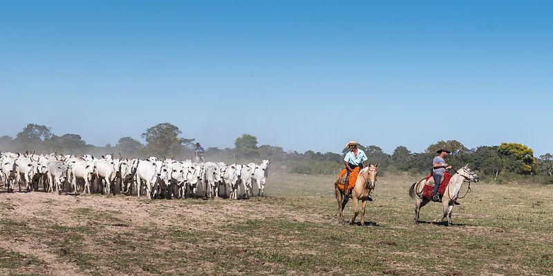 Pantaneiro cowboys