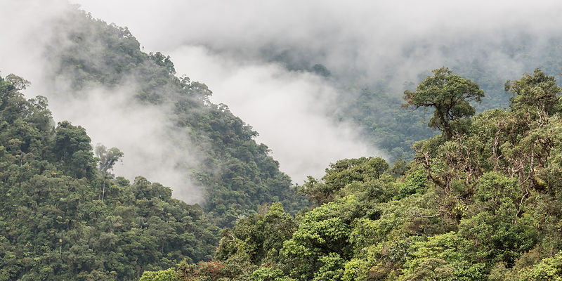 Andean cloud-forest