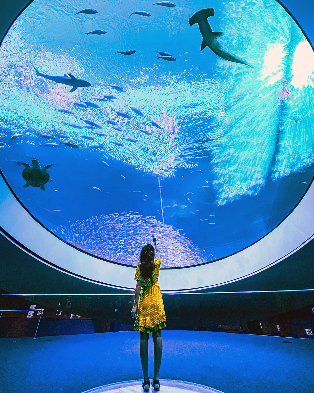 Woman looking at shark tank in aquarium in Miami