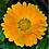 Thumbnail: Calendula Flowers Marigold | Bulk Herb