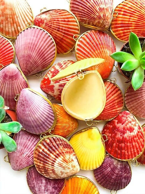 Seashell Salves & Balms