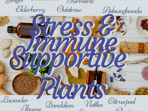 Herbs for Immunity & Stress Support