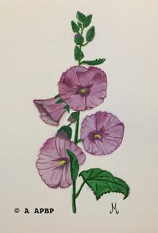 098 une rose trémière