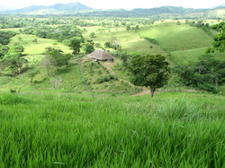 Caribbean Livestock Pastures4