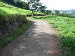 Caribbean Livestock Roads5