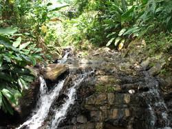 Caribbean Livestock Springs7