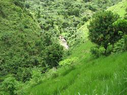 Caribbean Livestock Pastures2