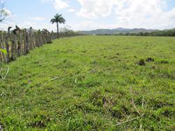 Caribbean Livestock Pastures6