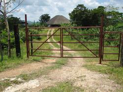 Caribbean Livestock Roads1