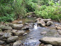 Caribbean Livestock Springs5