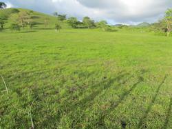 Caribbean Livestock Pastures10