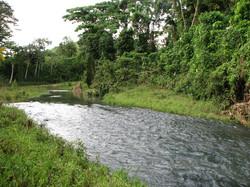Caribbean Livestock Springs3
