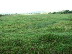 Caribbean Livestock Pastures3