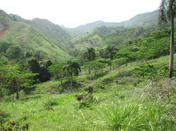 Caribbean Livestock Pastures1