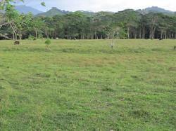 Caribbean Livestock Pastures9