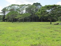 Caribbean Livestock Pastures7