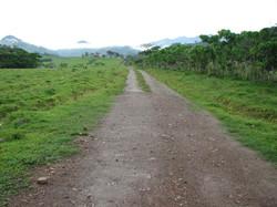Caribbean Livestock Roads3
