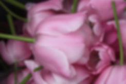 Kamm, Hofladen, Gedicht, Tulpen