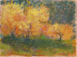 forsythia in spring - pastel