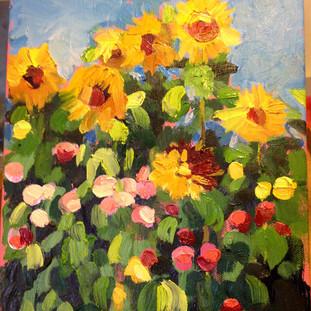 sunflowers in napa