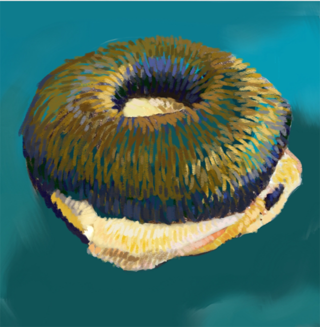 bagel RESIZE.png