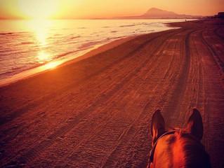 Mediterranean Equestrian Tour Oliva Nova/Spain - CSI2*
