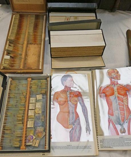 Medical glass slides & chromographs collection