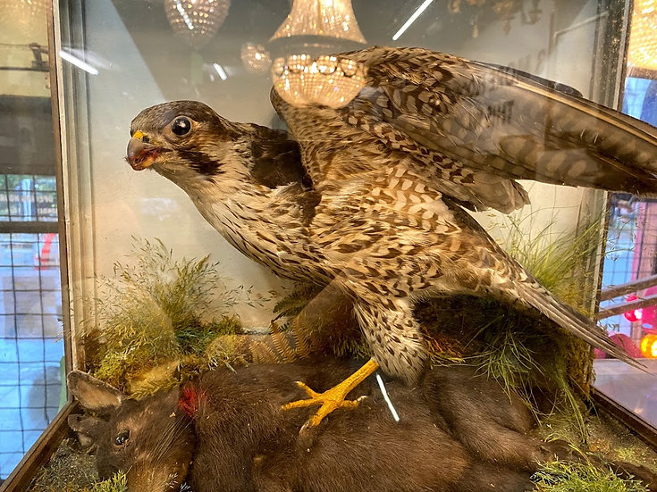 TAXIDERMY - A bird of prey hunting scene.