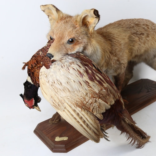 TAXIDERMY - a study of a fox holding a pheasant, on oak base