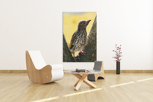 Lost Baby Bird Yellow Returned to its Nest Photo | Canvas