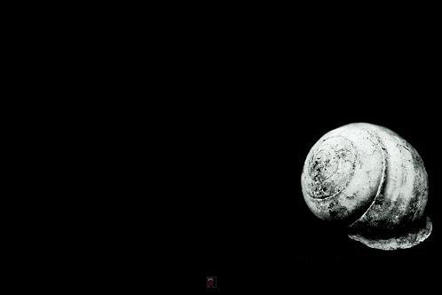 Mr Snail Single White | Super Macro | Commercial Licence