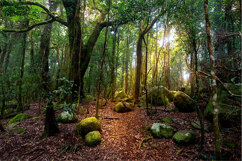 Light in the Enchanted Forest   Landscapes   Commercial Licence