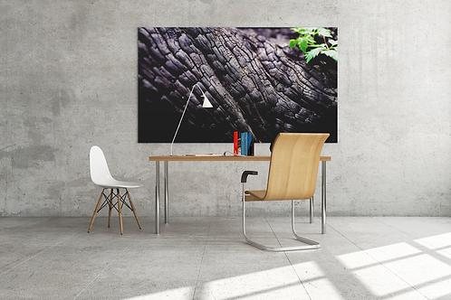 Burnt Coal Tree Bark Photo   Canvas