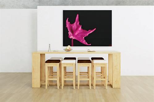 Pink Flower of Wild Eggplant Photo   Close Up Shot   Canvas