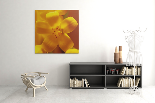 Orange Jasmine Flower   Macro   Canvas Print Archival Quality
