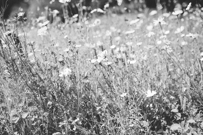 noirblanc-fleursB.jpg