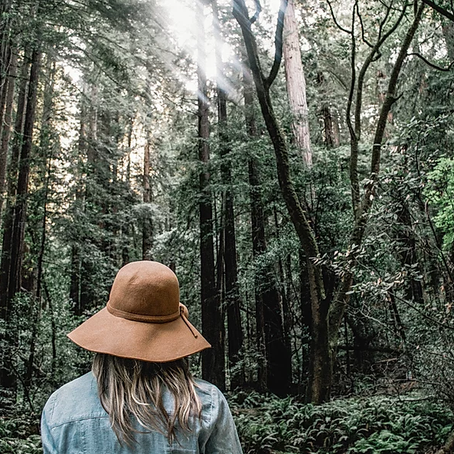 Boost your Immunity with Forest Bathing