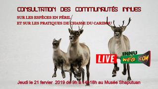 Consultation des innues sur la chasse du caribou