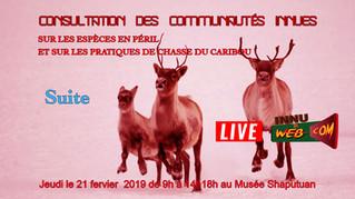 Consultation des communautés innues sur le caribou