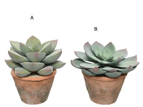Succulent Pot sml
