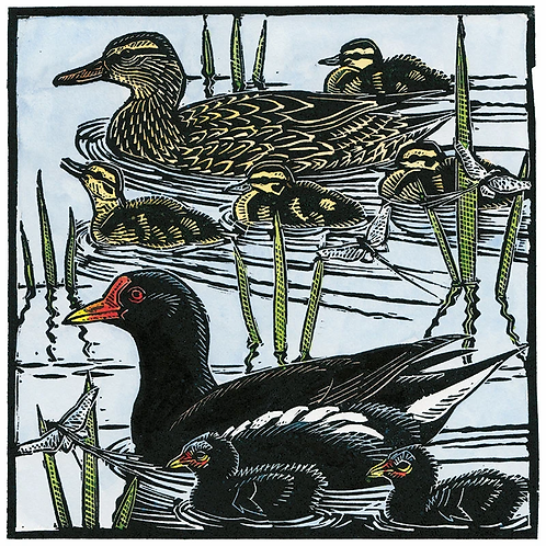Dry Red Card -Moorhens,Mallards & Mayflies