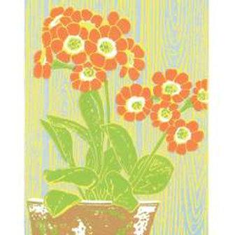 Dry Red Card -Orange Auricula