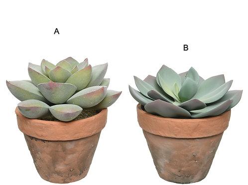 Succulent Pot Large