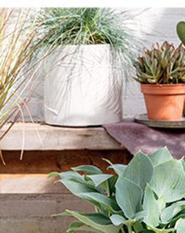 fake plants.jpg