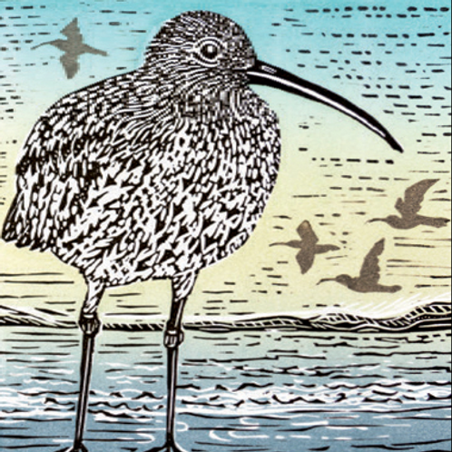 Canns Down Card - Curlew
