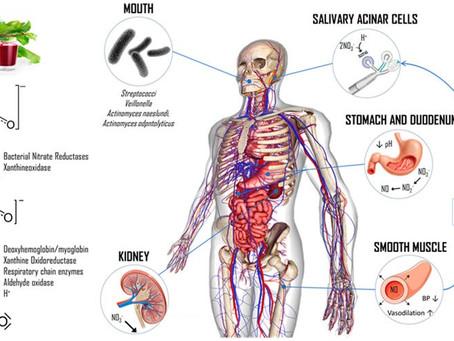 Νιτρικά Άλατα, Αργινίνη, Κιτρουλλίνη. Ποιος ο ρόλος τους στη στυτική λειτουργία και στους αθλητές;