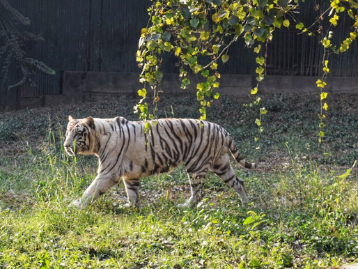 A Weekend Trip to the New Delhi Zoo