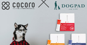 【お知らせ】「cocoro × DOGPAD」犬商品購入者全員サンプルプレゼント!