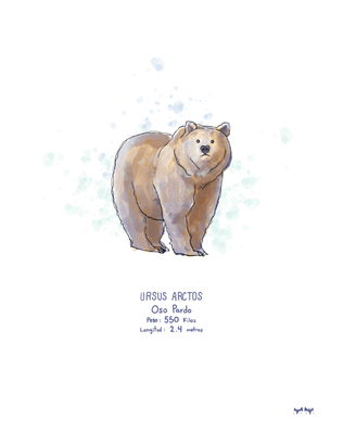 Cuadro-Oso-Grizzly.png