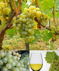 Chardonnay, a bluffers guide.